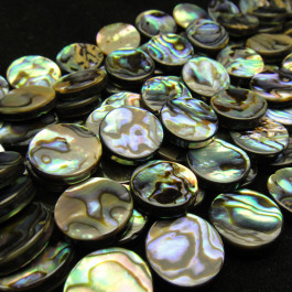 Abalone 14mm Coin Beads