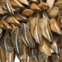 Kamagong (Tiger Ebony) Thin Slice Wood Beads